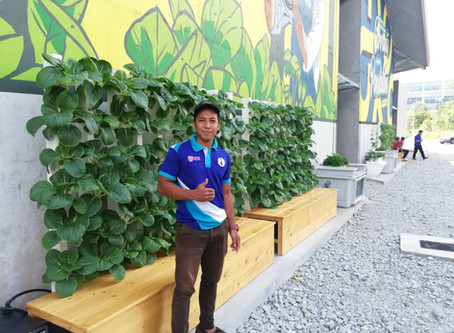 Urban Farming Innovation as part of landscaping In Malaysia