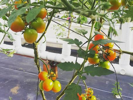 COVID-19 | Overcome food insecurity through urban farming