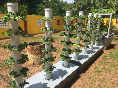 Where to grow your urban farm – Here are 7 ideas.
