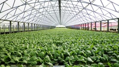 Opportunities in Urban Farming