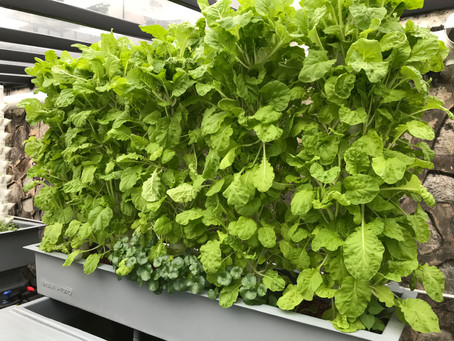 Urban Farming: A Conscious Choice to Food Security