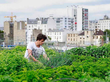 Together We Can Do So Much: 3 Urban Farming Projects Supported by Local Governments and Organization