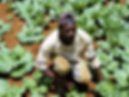 farmer-cabbage.jpg