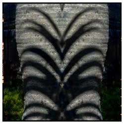 Maori Palm 2