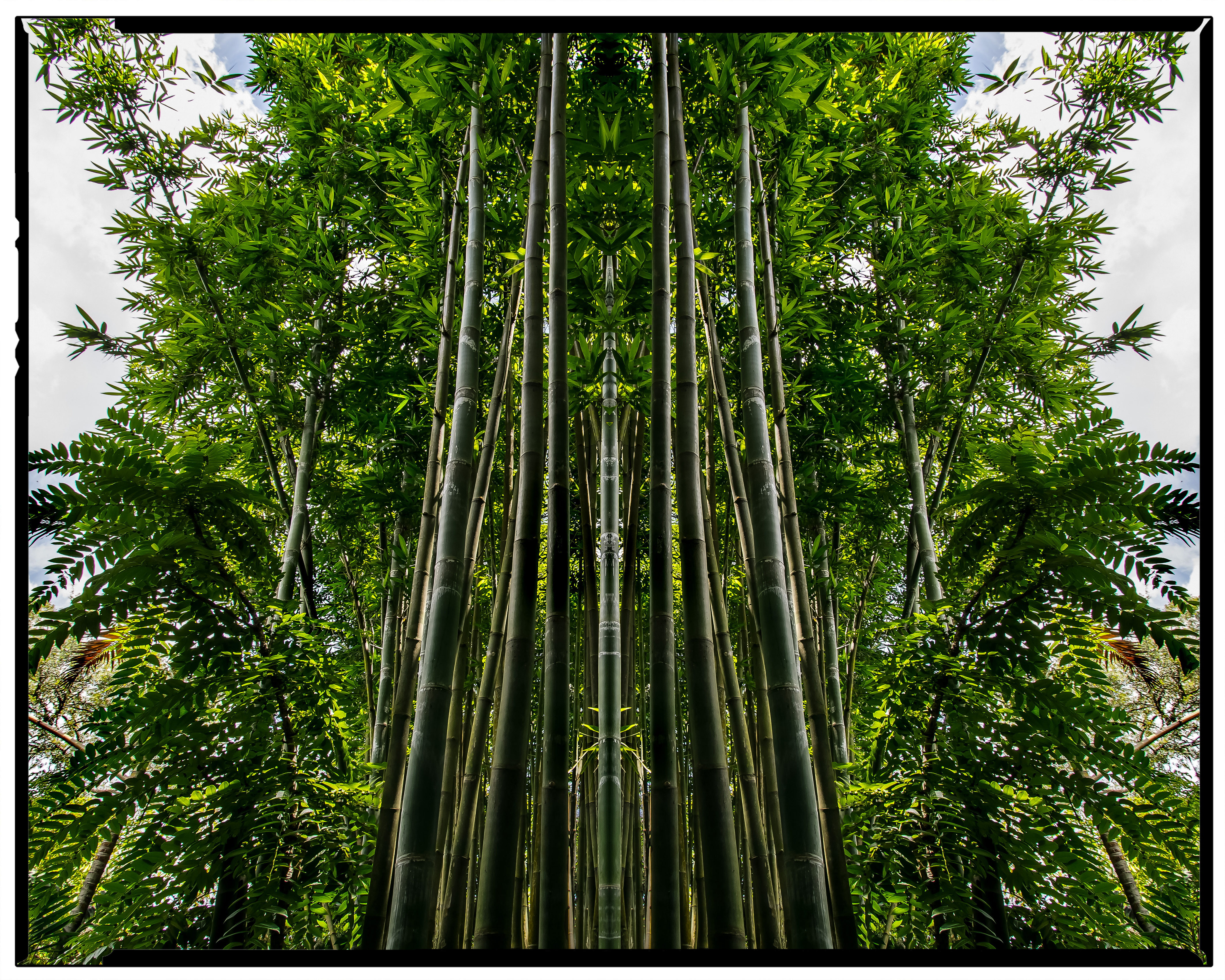 Bamboo Spires, 2019