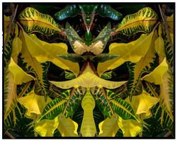 Yellow Croton, 2019