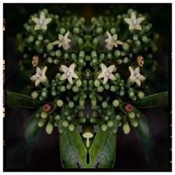 green flower st
