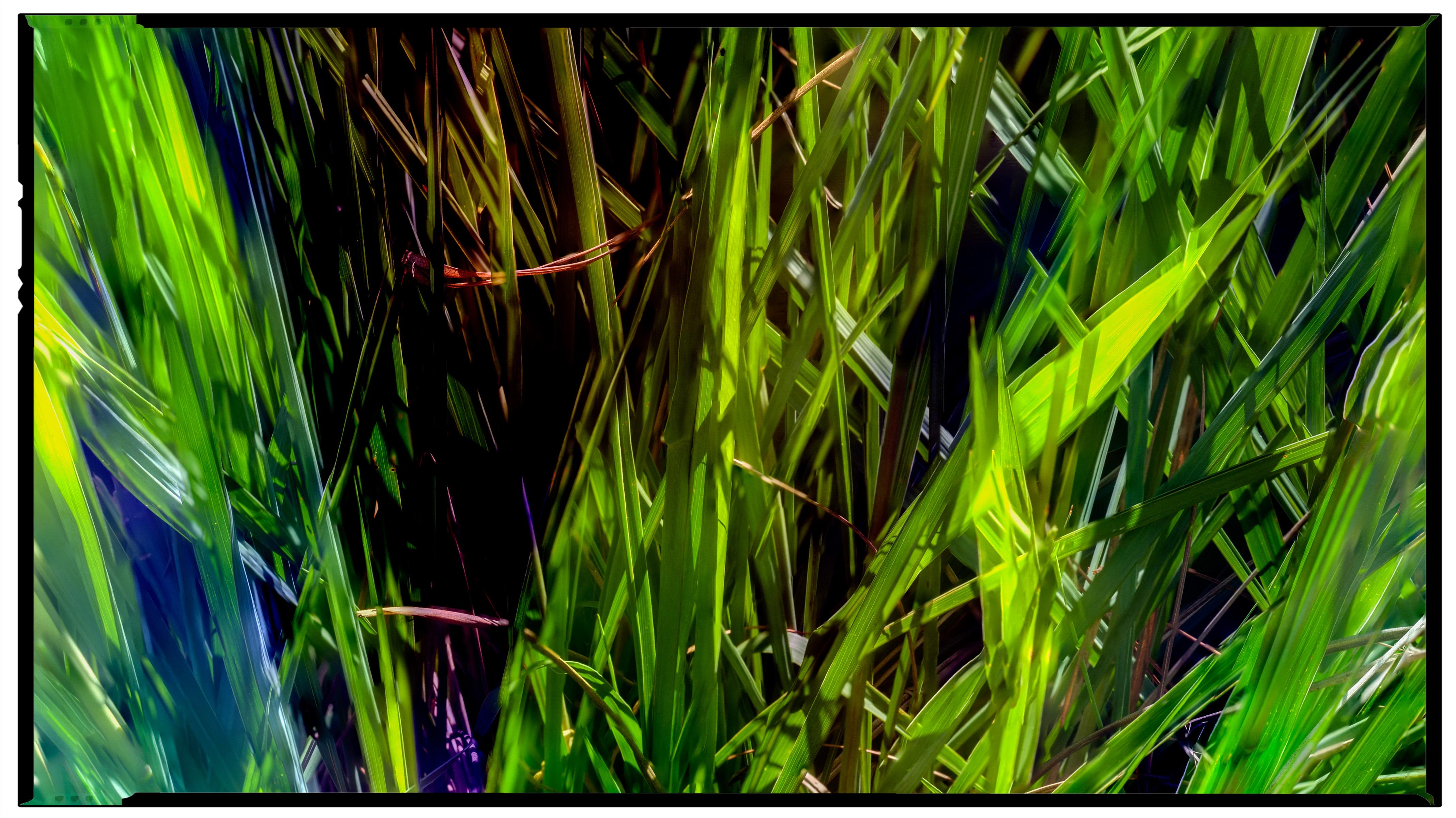 Watercolor Grasses, 2018