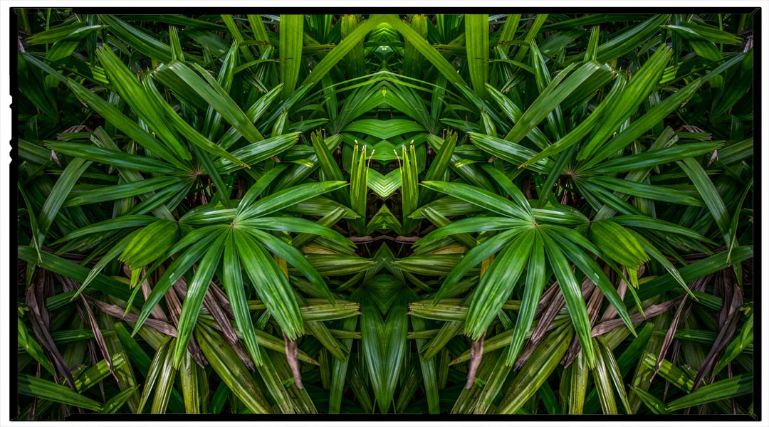 Palm Guy, 2018