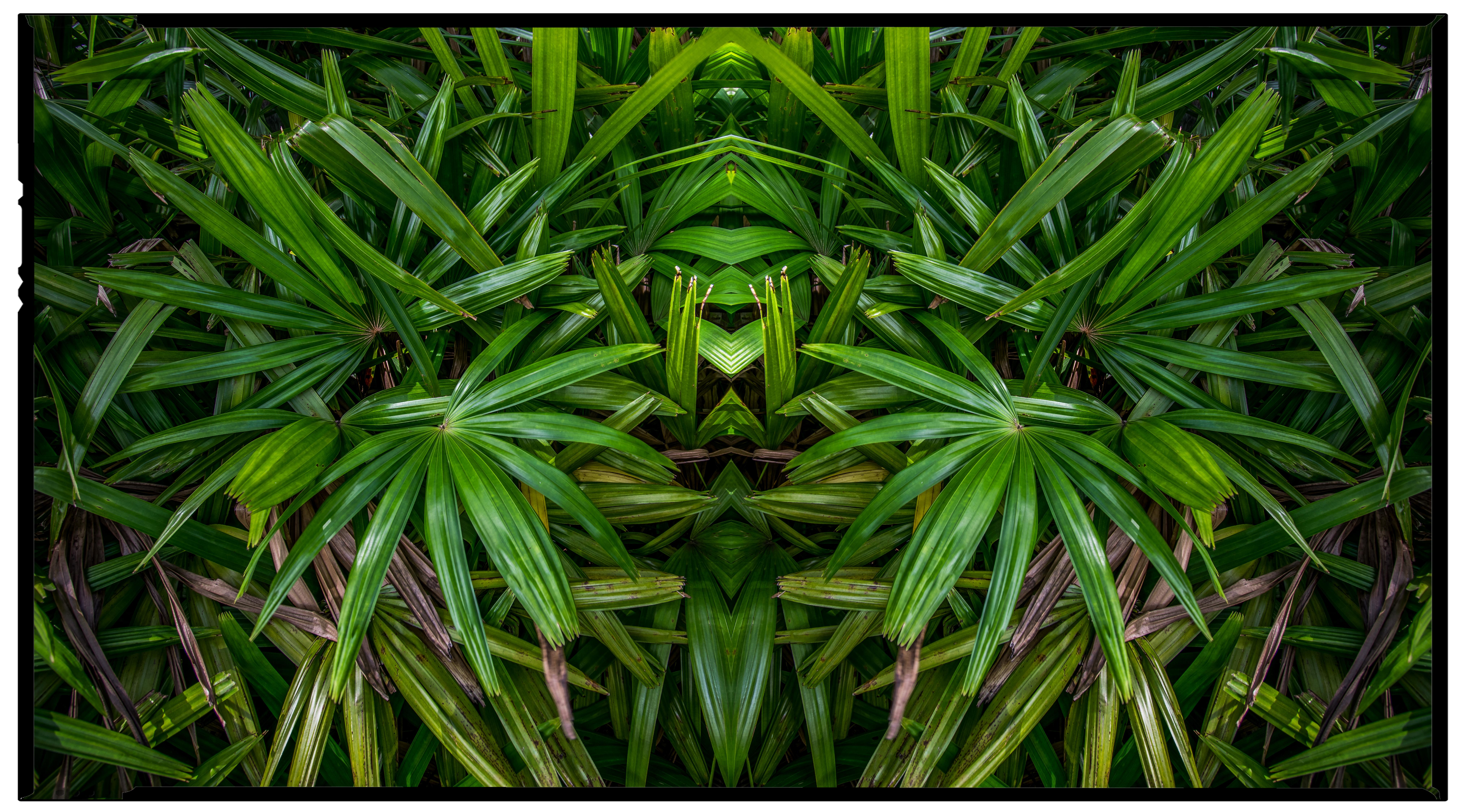 Palm Guy, 2017