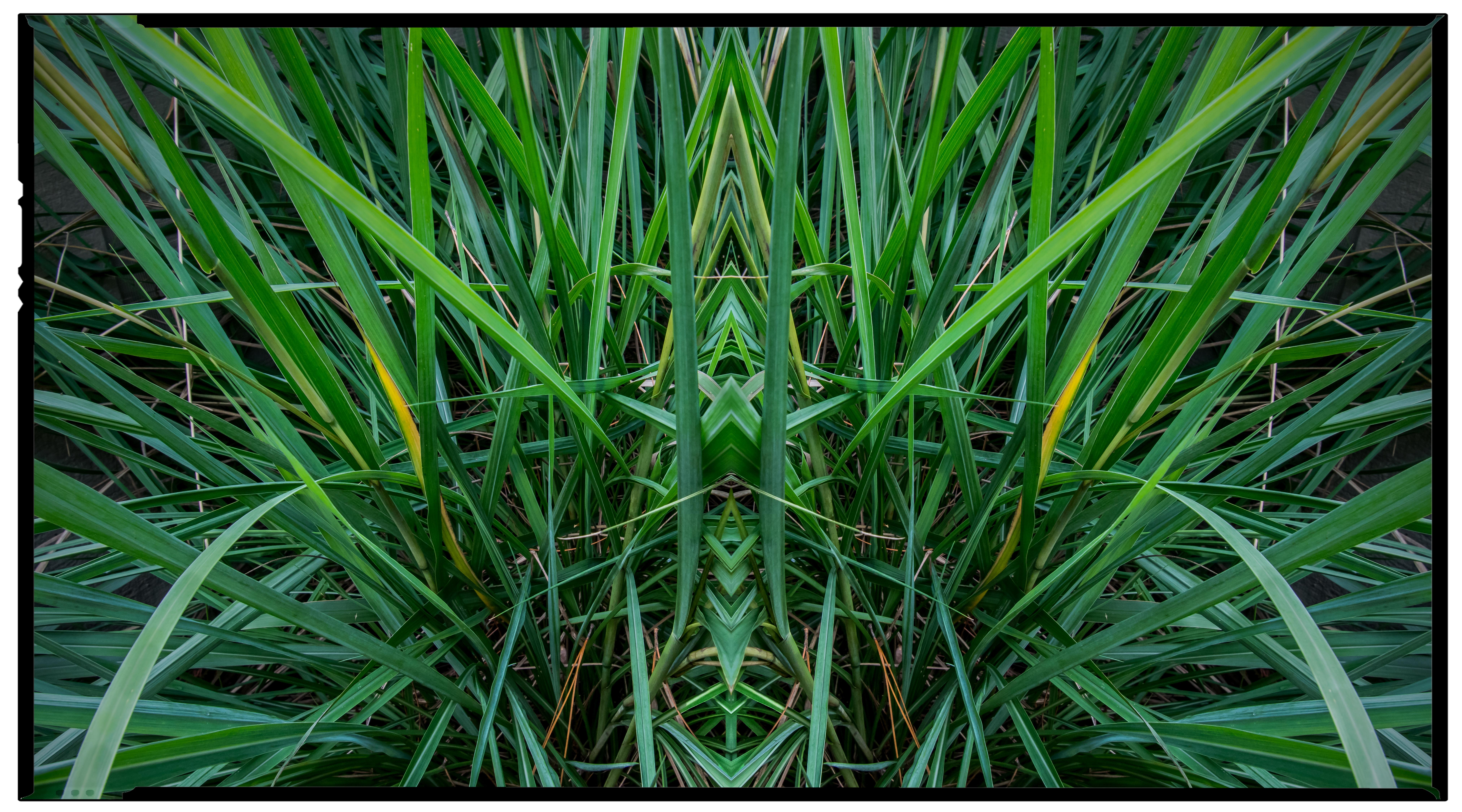 October - Grasses