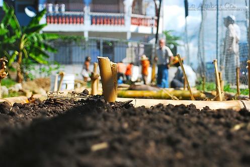 Fertilizante Natural para todo tipo de plantas