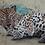 Thumbnail: Lazy Leopard