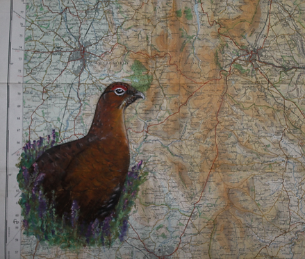 Red Grouse on vintage map of Derbyshire