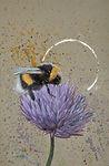 Bee Pixabay FB.jpg