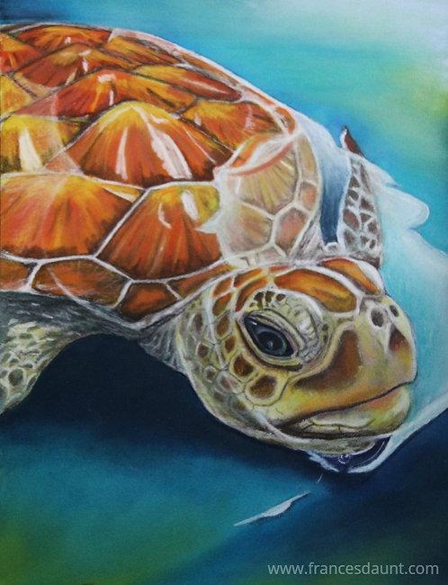 Tessellated Turtle
