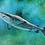 Thumbnail: Shark