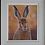 Thumbnail: Golden Hare