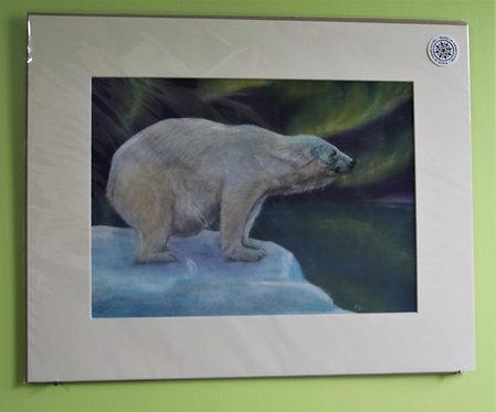 Northern Ice Bear