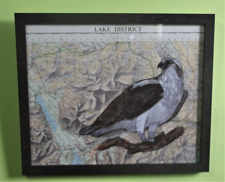 Osprey on vintage map (Lake District)