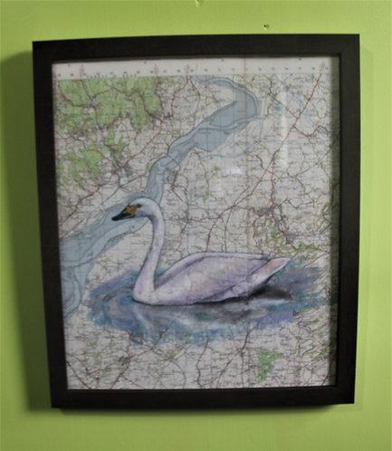 Bewick Swan on vintage map (Slimbridge)