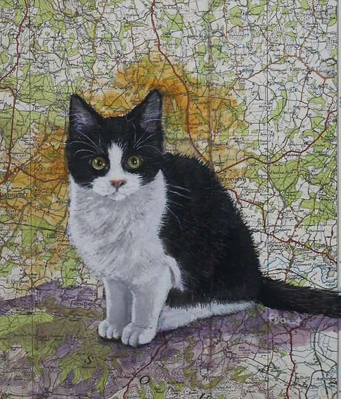 Kitty Map