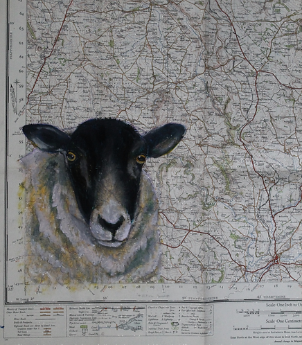 Sheep Map