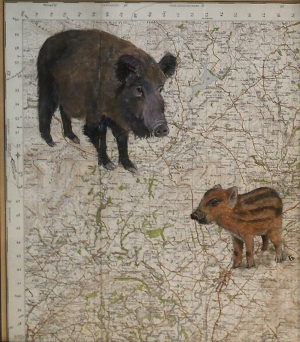 Wild Boar Map