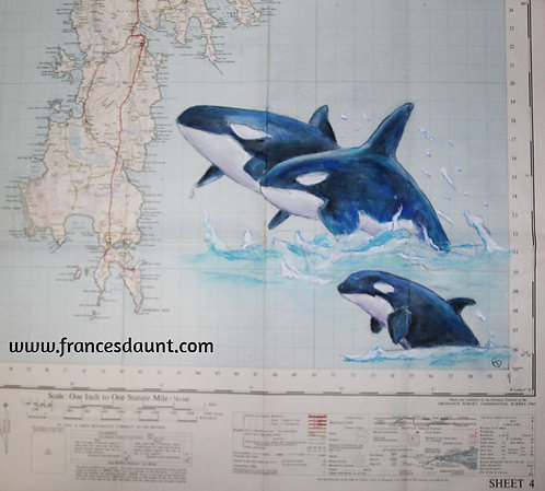 Orcas in the Shetlands (on vintage map)