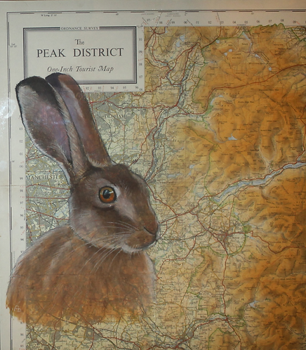 Peak District Hare