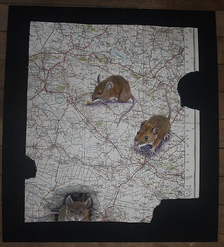 Mice Map