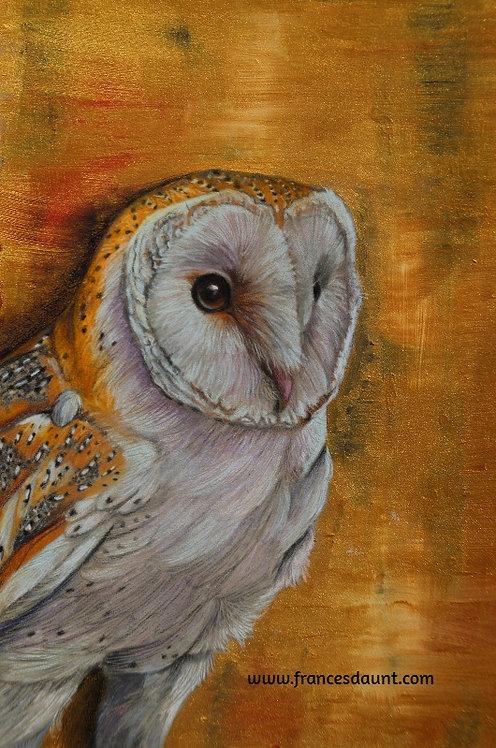 Barn Owl - The Golden Hour