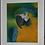 Thumbnail: Macaw