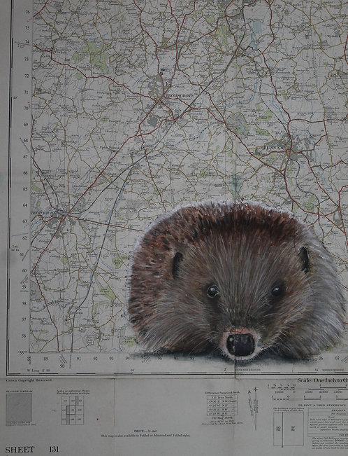 Hedgehog on Vintage Map