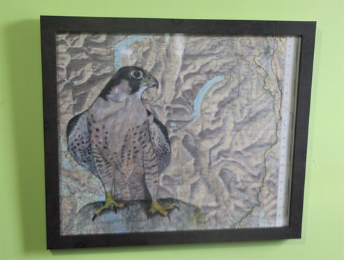 Peregrine falcon on vintage map (Lake District)