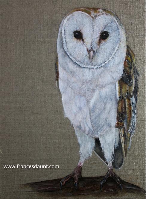 Barn Owl Study No 2