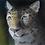 Thumbnail: Study of an Amur Leopard