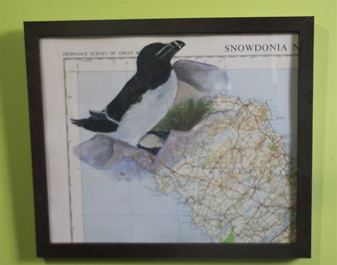 Razorbill on vintage map (Anglesey)