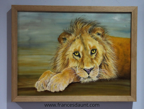 Just Watching - oil painting of a young male lion