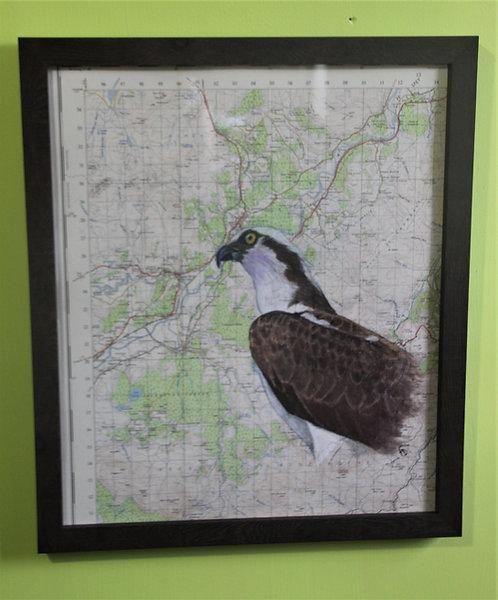 Osprey on vintage map (Cairngorms)