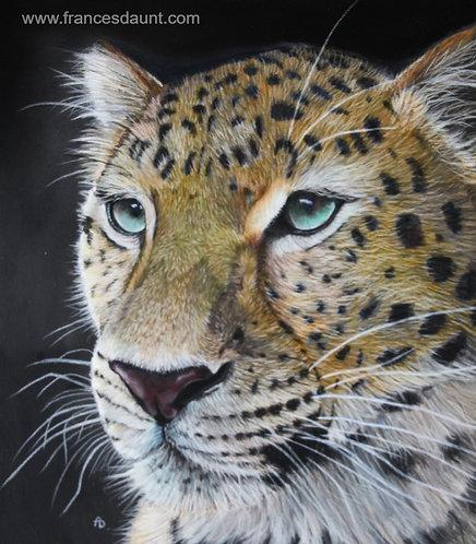 Study of an Amur Leopard