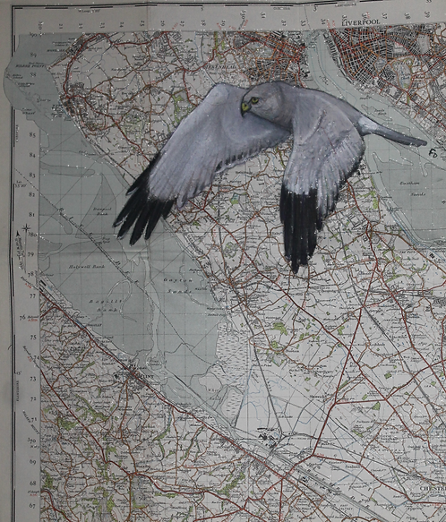 Hen Harrier Map