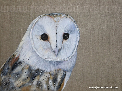 Barn Owl Study No 1