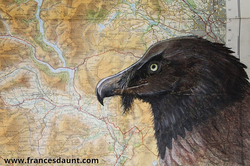 Vigo, the Bearded Vulture, on vintage Peak District map