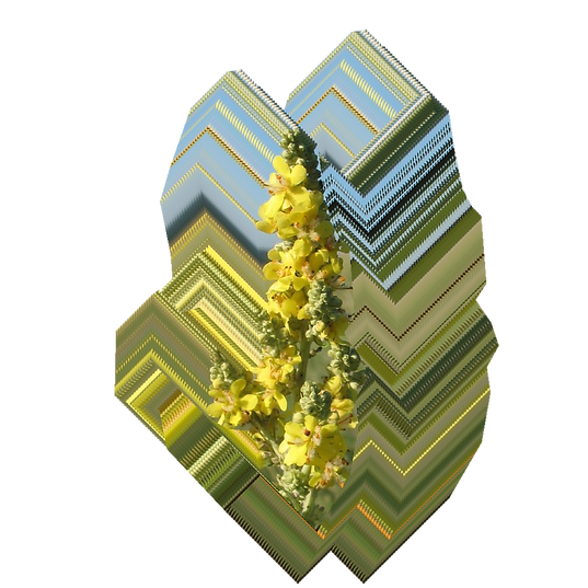 Verbascum lychnitis.png