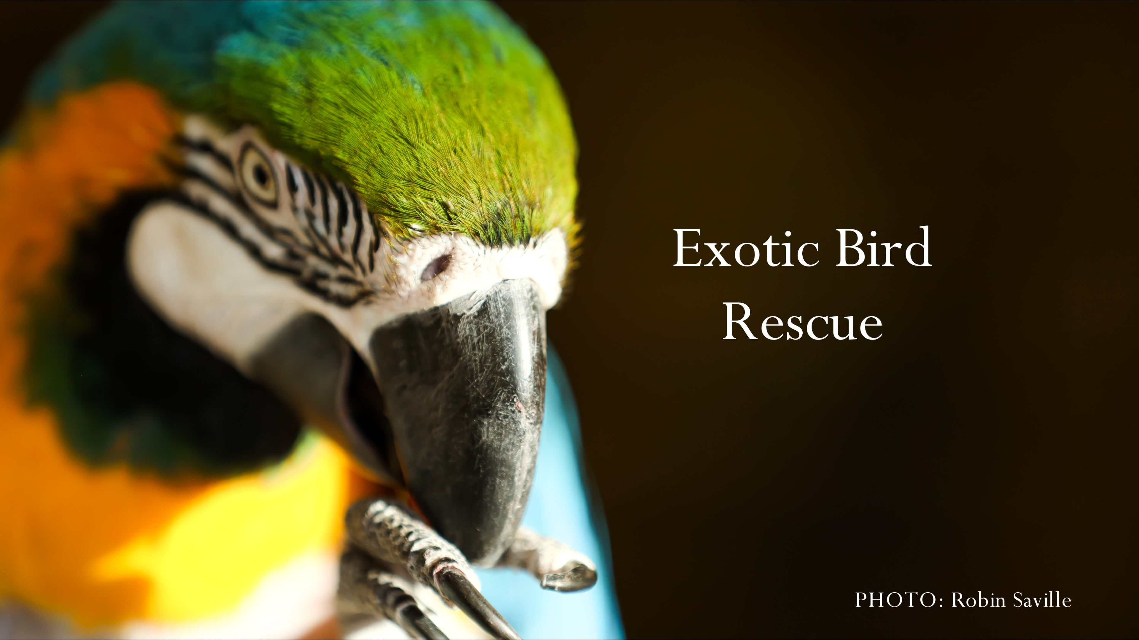 Exotic Bird Rescue