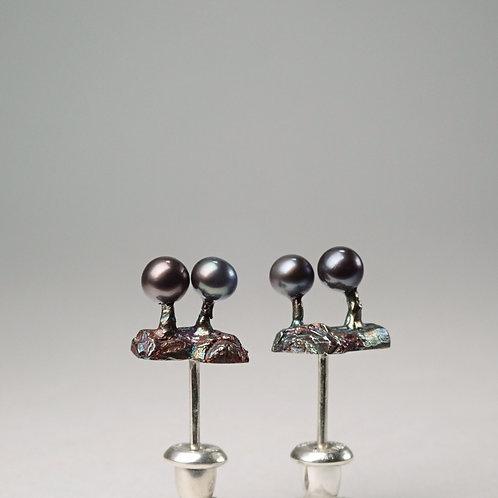 粘菌ピアス(ルリホコリ)セット slime mold (Lamproderma columbinum) earrings set