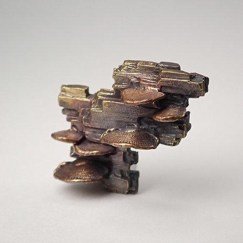 ウチワタケ×珪化木 ピンバッジ tree mushroom & silicified wood pins
