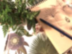 植物草圖2 (1).jpg