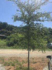 wingedelm_edited.jpg